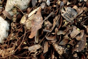 Fallen Leaves by votra