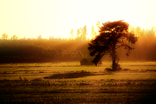 A Lonely Tree by KasperGustavsson