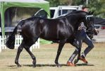 STOCK - 2014 TotR Arabians-56 by fillyrox