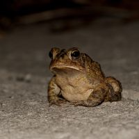 Toad Portrait by nescio17
