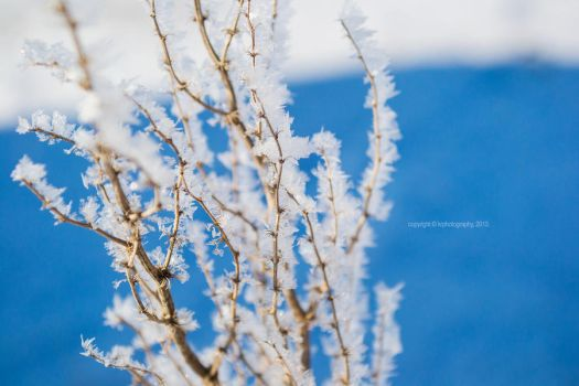 winter frost by luckydesigns