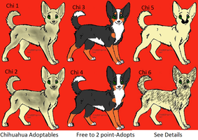 CLOSED Free dog adoptables Chihuahua by Wolfs-Hybrid