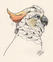 Cockatoo Ink drawing by DragonsDust