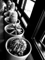 more cactus by mR-StIck