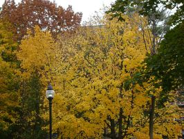 Canadian Fall Colours 3 by Aswang301