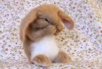 Needle felted bunny by Yvonnesworkshop