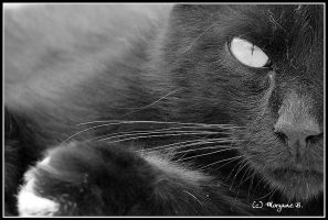 my kitty's dad by moem-photography
