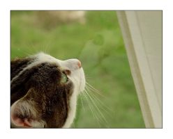 Reflections Of A Cat by achilles-heel