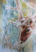 deer by danuta50