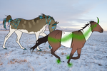 Two Cold Padros by FoxtailRidgeStables
