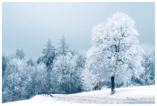 Winter Wonderland by Lilyas