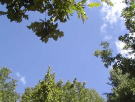 Leaves and Sky by Ivette-Stock
