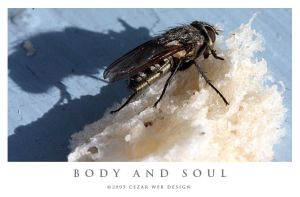 Body and Soul by cezars