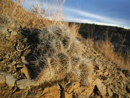 prickly1 by lunde88