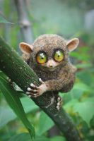 The tarsier [stuffed toy] by Irentoys