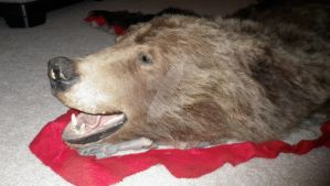 Silverback Grizzly Bear Rug Head by Bwabbit