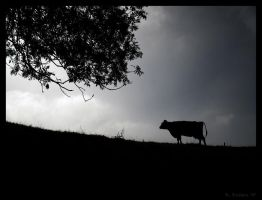 Cow silhouette by Dreamk8