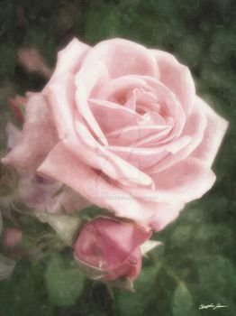 Pink Roses in Anzures 2 Nostal by ChristopherinMexico