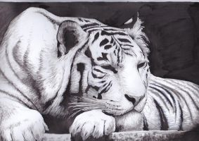 sleepy white tiger by SpleenJuice13