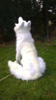 Amarok, the Polar Wolf sing in the spring SOLD by Kreativjunkie