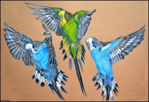 Flying budgies by Verenique