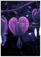Tone of purple by Bloddroppe-nature