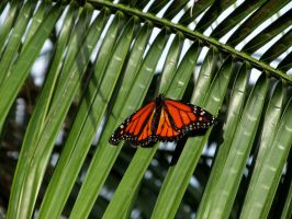 Butterfly on palm frond by WisteriasWeb