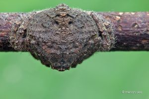 Wrap Around Spider by melvynyeo