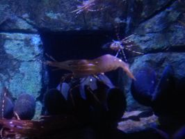 a huge krill by vienna2000