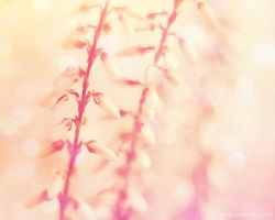 floral dreaming II. by magnesina