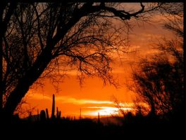 Palo Verde Frame Orange Sunset by RooCat