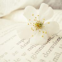 .: spring flower :. by all17