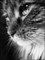 My Cat Ginger by liyalolita