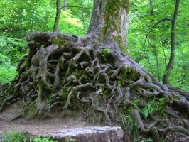 Roots by Jantiff-Stocks