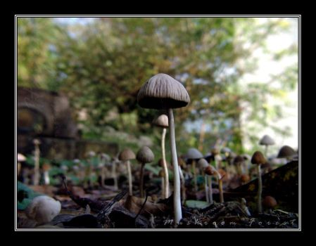 Mushroom Forest by Subtlerevolutionist