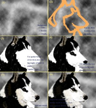 How to draw a Siberian Husky by sharehin