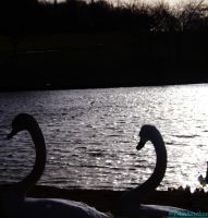 pair watching over the lake by IamNasher