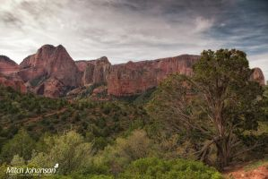 The Juniper and Kolob by mjohanson