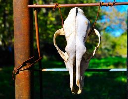 Deer Skull by sweetz76