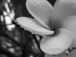 Droplets in Black and White by Sweetlittlejenny