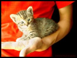 Kitty: Sammy Davis Junior by eclectic-fusion