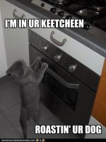 my first lolcat by cinfa