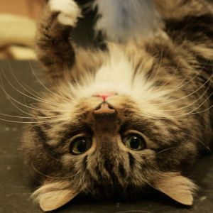 UpsideDownCat by LeaHenning