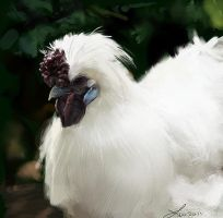 Silky Chicken Study 2 by LindseyWArt
