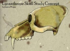 Werewolf Skull Study by Rootfireember