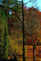 autumn in the mountains by valerianruby