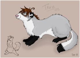 Mustela putorius CONFUS by twisz