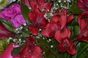 Stock - Flowers by Vesperity-Stock