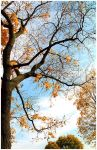 Gold autumn by whatthis
