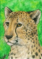 ACEO - cheetah by Evriale